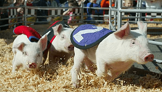 Puyallup Spring Fair Racing Pigs